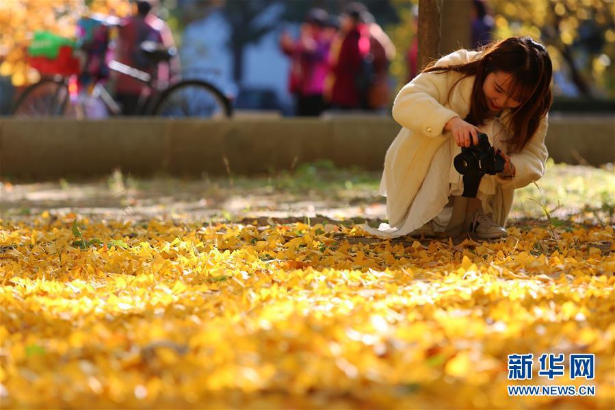 (环境)(3)赏秋清华园