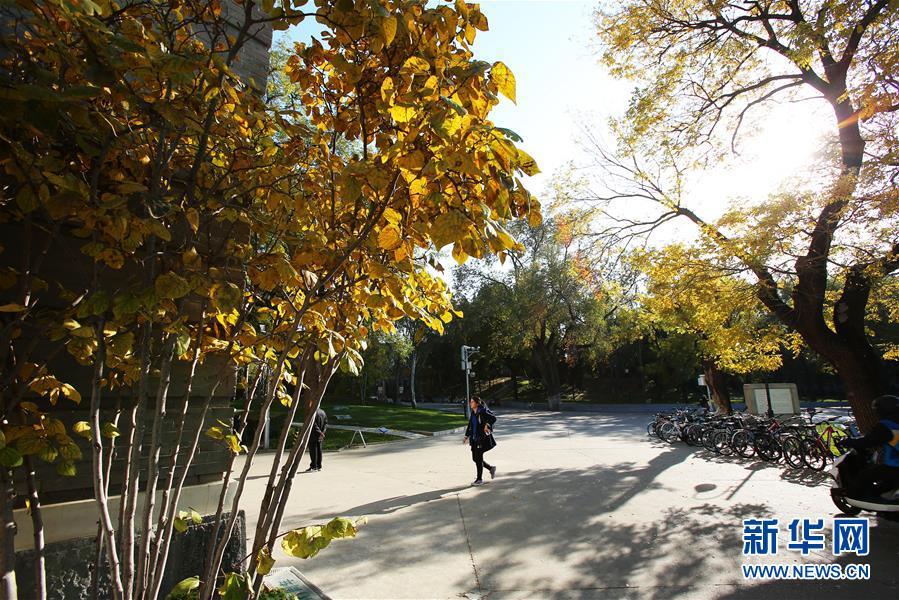 (环境)(9)赏秋清华园